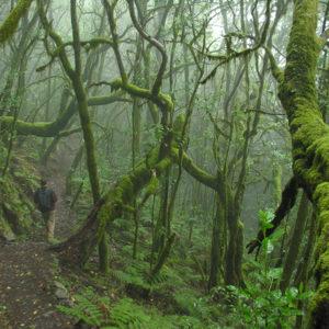 Bosque de Garajonay, La Gomera, Canarias